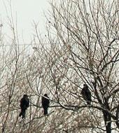 کارگاه بومگردی کاخ گلستان و پرنده نگری در پارک شهر